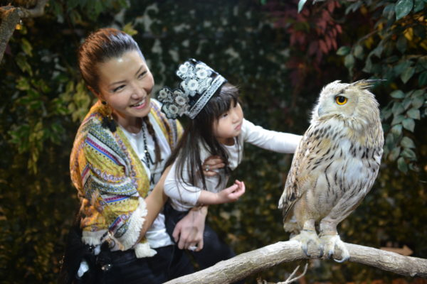 japan things to do, japan themed cafe, kyoto owl cafe, owls, owl