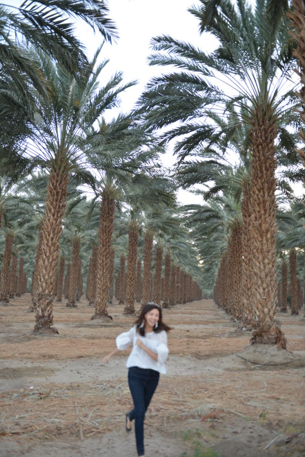 palm tree forest, palm tree nursery, palm tree farm, niland, road trip ideas for california, california road trip